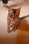 Lara the kitten